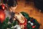 5 plantas venenosas para perros que debes cuidar durante la temporada de vacaciones