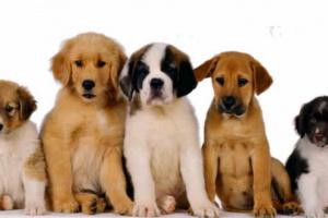 Ayuda financiera para cirugía de mascotas