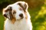 Ritmos cardíacos irregulares en perros