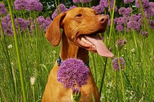 Diez plantas domésticas que son peligrosas / tóxicas para perros y gatos