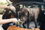 Deshidratación en perros: síntomas, causas y tratamiento.