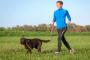 ¿Su mascota de envejecimiento necesita una nueva dieta y estilo de vida?