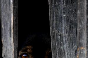 5 signos de que tu mascota ha visto un fantasma