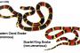 Intoxicación por mordedura de serpiente de coral en perros