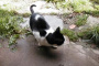 Gatos y enfermedad de movimiento