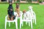 Criando un perro amigable para perros
