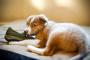 ¿Que hacer para evitar que tu perro mastique?