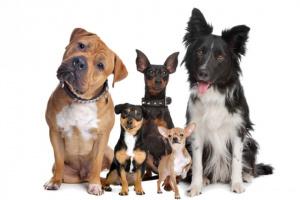 Síntomas de un accidente cerebrovascular canino