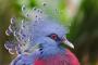 Algunas de las aves mascota menos comunes