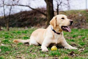 Cómo convertirse en un manejador de perros