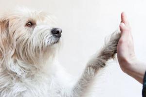 Mal de chagas en los perros