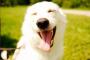Los diez mejores consejos para mantener la respiración de su perro fresca