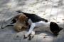¿Pueden los perros contraer enfermedades de transmisión sexual?
