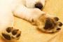 10 consejos útiles para cuidar las patas de tu perro