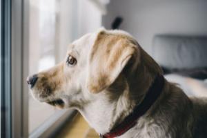 ¿Debo hacerle la prueba de gusanos del corazón a mi perro cada año?