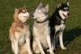 Ansiedad y trastornos compulsivos en perros