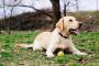 Determinando el peso ideal para un perro