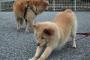 Doga: Yoga para perros