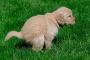 Razones por las que tu perro tarda en decidir donde defecar