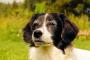 Consejos de ejercicio para perros con artritis