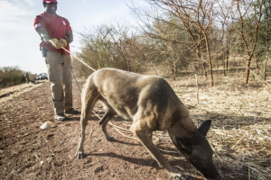 Perros Detectando Scat