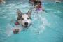 Cosas para nadar: Cómo quitar el agua en las orejas de los perros