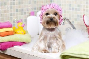 Usando champús y acondicionadores para lavar tu perro