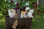 Pseudoquistes perirenales en gatos