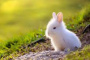 Cojeando debido a dolor o lesión en conejos