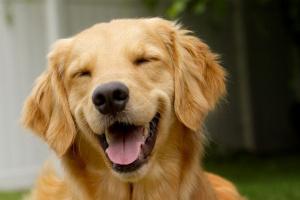 ¿Mi perro tiene pulgas?