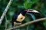 El costo de compra y cuidado de un ave mascota