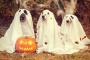 ¡Mantenga a sus mascotas a salvo en Halloween!