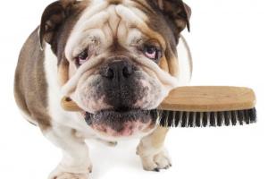 Cómo cuidar el pelo de tu perro: desde el cachorro hasta la tercera edad