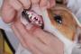 Inflamación de boca y úlceras (crónicas) en perros