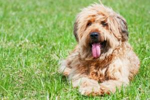 Degeneración de la imagen formando parte del ojo en los perros