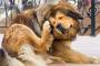 Problemas comunes de la piel en perros
