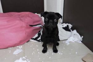 ¿Por qué algunos perros sufren ansiedad por separación?