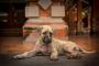 8 enfermedades repugnantes que puedes atrapar de tu mascota y cómo prevenirlas