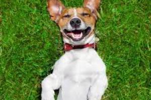 Reacciones de la piel a las drogas en los perros
