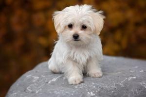 Preparar a su perro mayor para un nuevo cachorro en la casa