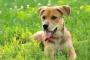 Aumento de la frecuencia cardíaca debido a las contracciones prematuras en los perros