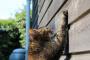 Cómo evitar que tu gato deje de arañar.