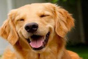 Toxicidad antiinflamatoria no esteroidea en perros