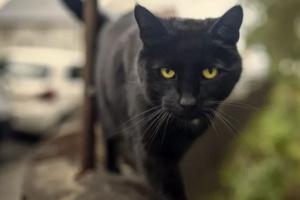 ¿Qué hace que un gato sea molesto y se comporte mal?