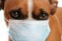 Tumor de mastocitos (mastocitoma) en perros