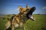 Comprendiendo la agresión canina.