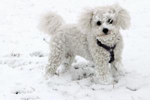 Tres consejos principales para pasear a tu perro en un clima nevado