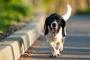 Envenenamiento por plomo en perros