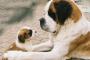 Remedios caseros para tenias en perros