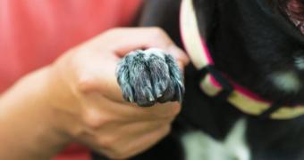 ¿Por qué es importante mantener cortas las uñas de su perro?
